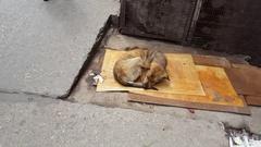 Dirty filthy skinny street dog sleeps, people walk by, India Stock Footage