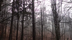 Rain in the forest. Transcarpathia Stock Footage