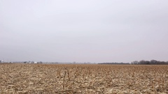 Empty harvested corn field in winter Stock Footage