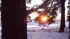 Pine branch at sunset, snowy winter forest , falling snowflakes sparkling in the Stock Footage