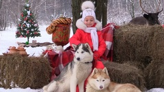Little joyful girl stroking dogs Husky in winter forest nature reserve zoo Stock Footage