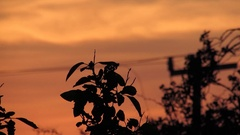 Orange Sunset & Trees Silhouette Stock Footage