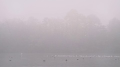 Birds by the river in the fog Stock Footage