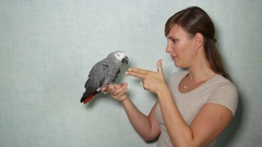CLOSE UP: African grey parrot playing with girl, pretending being shot and dead Stock Footage