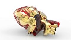 Model of artificial human heart 3d rendering Stock Footage