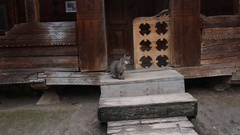 Gray cat is sitting on a stairs of an old wooden village house Stock Footage