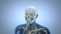 Animation showing all the parts of the Skeletal System with transparent body. Stock Footage