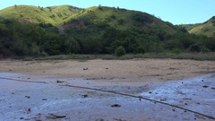 4k Komodo dragon walking zoom in dry mangrove swamp Rinca island Stock Footage