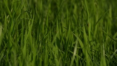 Green Gras Stock Footage