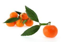 Fresh clementines organic farming, on a white background Stock Photos