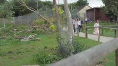 4K Happy family looking into wallaby enclosure at wildlife park Stock Footage