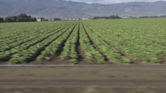 Driving by rows of vegitables on California farm Stock Footage