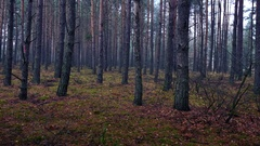 Autumn in the forest during cloudy, rainy day. Stock Footage