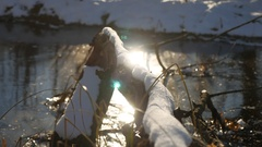 Tree branch frozen in the ice forest river nature landscape winter sunlight Stock Footage