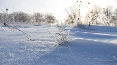 Frozen sunlight grass nature sways in the wind in the winter snow falls Stock Footage