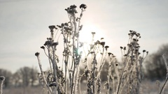 Frozen grass sunlight sways in the wind in the winter snow falls nature Stock Footage
