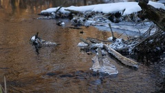 Forest river flowing beautiful frozen ice on a dry branch swinging, nature Stock Footage
