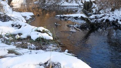 Forest creek flowing grass in the forest late beautiful winter nature landscape Stock Footage