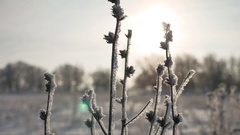 Frozen sunlight grass sways in the wind in the winter snow falls nature Stock Footage