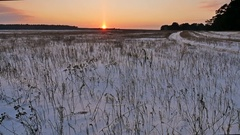 Winter landscape with snow field of dry grass late in the evening nature sun Stock Footage