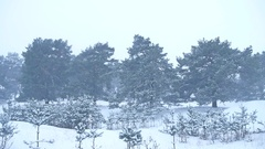 Beautiful christmas tree blizzard in winter landscape in nature late evening in Stock Footage
