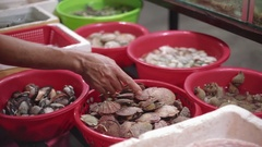 Live seafood, clams at the Fish Market. fresh cockles, scallops for sale in a Stock Footage