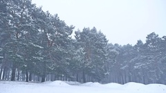 Beautiful christmas blizzard tree in winter nature landscape in late evening in Stock Footage