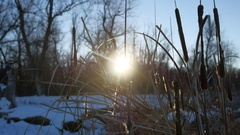 Dry grass reeds in the swamp snow winter nature sun glare Stock Footage