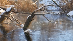 Winter landscape river in forest frozen water nature ice dry grass Stock Footage