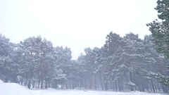 Beautiful christmas blizzard tree in winter landscape in late evening in Stock Footage