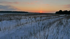 Winter landscape nature with snow field of dry grass late in the evening sun Stock Footage