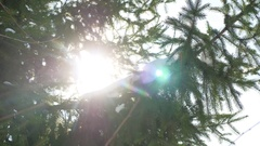 Winter fir tree nature snow sun glare on the branches of spruce landscape Stock Footage