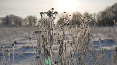 Frozen grass sways in the wind sunlight in the winter snow falls nature Stock Footage