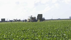 Farmers working on California farm collecting vegetables Stock Footage
