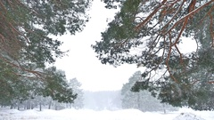 Beautiful blizzard christmas tree in winter landscape nature in late evening in Stock Footage