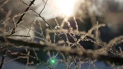 Frozen winter tree branches sun glare beautiful sunlight the landscape Stock Footage