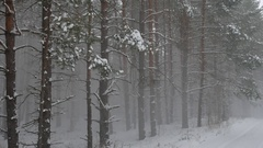 Winter wind storm forest nature snowing pine forest with snow winter landscape Stock Footage