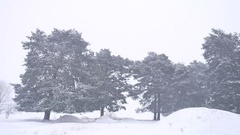 Beautiful christmas nature tree blizzard in winter landscape in late evening in Stock Footage