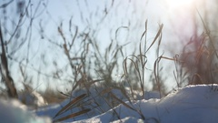 Dry grass sways in the wind winter snow nature landscape Stock Footage