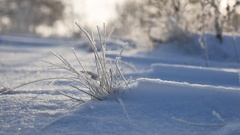 Frozen grass sways in the wind in the winter snow falls sunlight nature Stock Footage