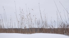 Dry grass sways in the wind snow winter field beautiful landscape nature Stock Footage