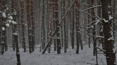 Winter wind storm forest nature snowing pine forest with winter snow landscape Stock Footage