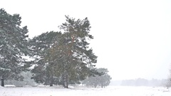 Beautiful nature blizzard christmas tree in winter landscape in late evening in Stock Footage