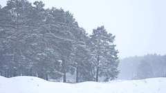 Beautiful christmas blizzard tree nature in winter landscape in late evening in Stock Footage