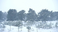 Snowstorm the woods snowing winter blizzard, christmas nature tree and pine Stock Footage