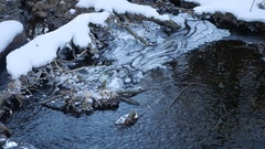Forest river flowing water late nature winter a melted ice landscape, arrival of Stock Footage