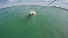Slow motion great white shark breaches for bait Stock Footage