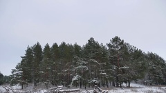 Winter forest pine forest wind with storm snow nature landscape beautiful tree Stock Footage