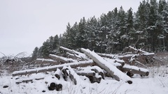 Sawmill logs of pine trees in snow winter forest Christmas tree nature landscape Stock Footage