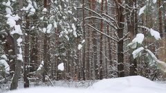 Christmas tree branch in snow pine winter fairy forest landscape nature Stock Footage